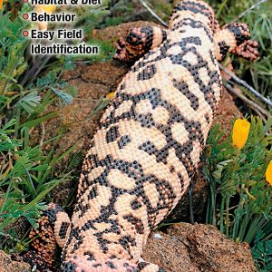 Reptiles & Amphibians of Mojave Desert